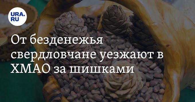 От безденежья свердловчане уезжают в ХМАО за шишками