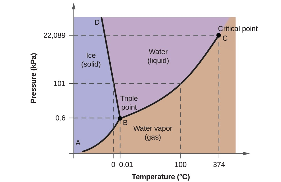 Wiring Diagram Database  Examine The Following Phase Diagram And Determine What Phases Exists At