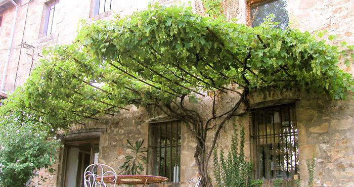 Les plantes grimpantes premi re partie - Comment tailler une treille de raisin ...