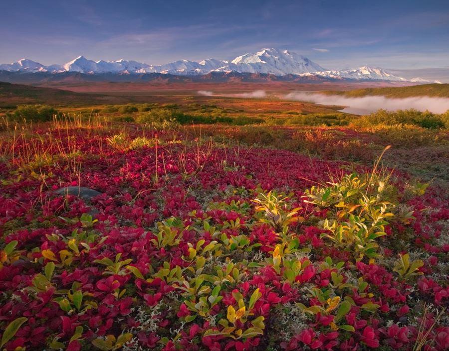 Denali National Park, Alaska, ΗΠΑ