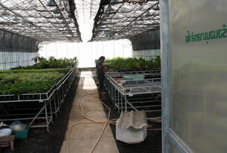 Inside greenhouse in the park