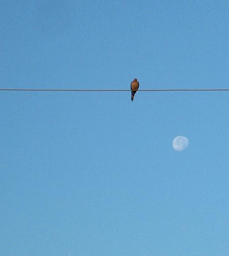 Dove & moon