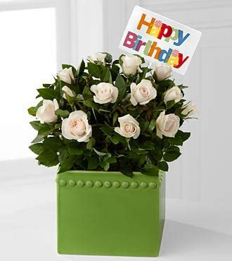 Green Greetings Happy Birthday Mini Rose Plant [pr65