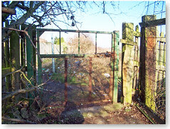 gate Cynthia Feb 08