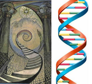 dna-jacobs ladder