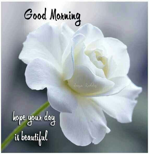 Good Morning Hope Your Day Is Beautiful Pictures Photos And Images