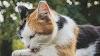 Gatos de colores llamativos: ¿qué significan sus pelajes?