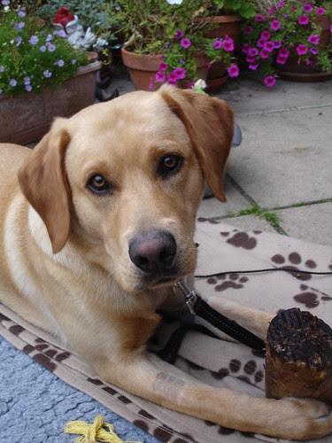 Oscar (4)