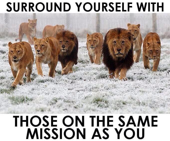 [Photo of lions with words superimposed]