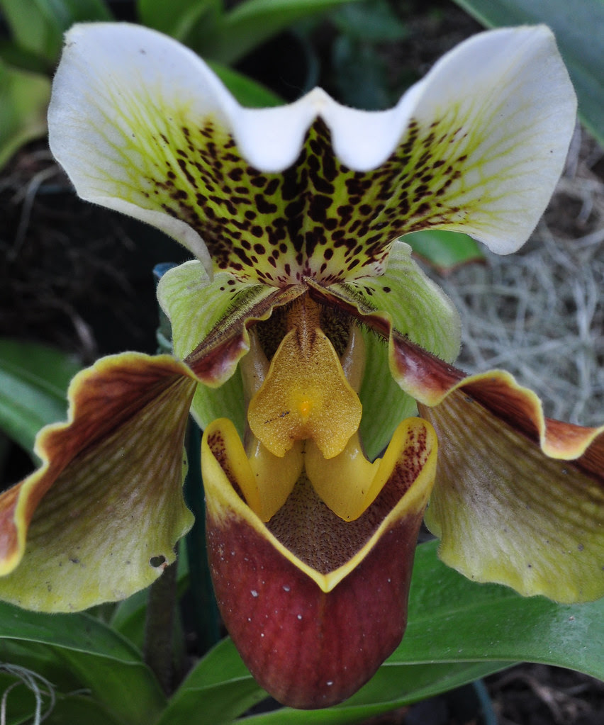 Kaplan Orchid Conservatory (24)