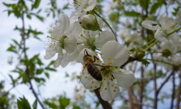 Θεσσαλία: Οι μελισσοκόμοι λένε «όχι» στα ραντίσματα
