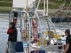 lamb for Antarctica