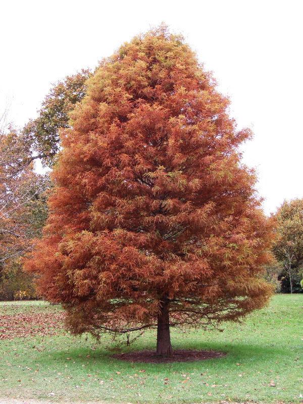 10 árboles De Otoño Galiciangarden