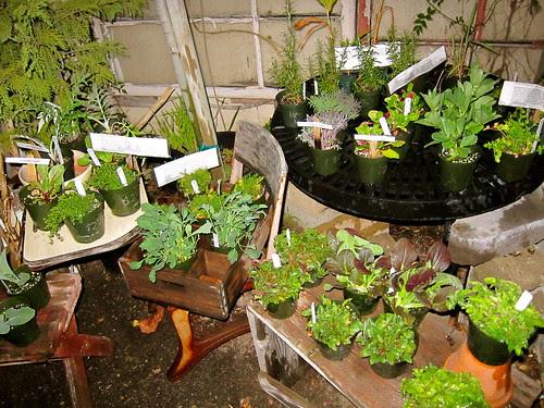 New cool season herbs and veggies!
