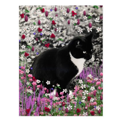 Freckles in Flowers II - Tuxedo Kitty Cat Post Cards
