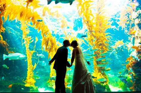 Falling in Love at Birch Aquarium at Scripps