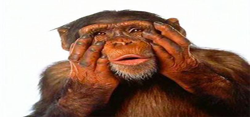 scimmia-stupita