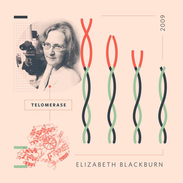 Resultado de imagen de Elizabeth Helen Blackburn