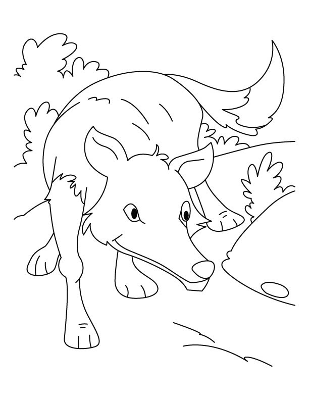 Wolf Pack Hunting Coloring Pages Images Sketch Coloring Page