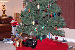 Buddah under the tree