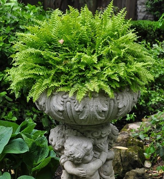 Deck The Halls Fern In Garden Urn