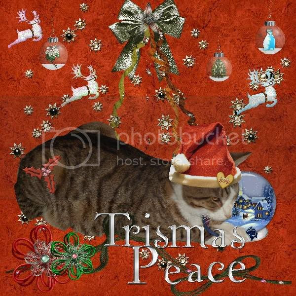 Christmas,Tabby Cat,Domestic Cat,Sir Tristan