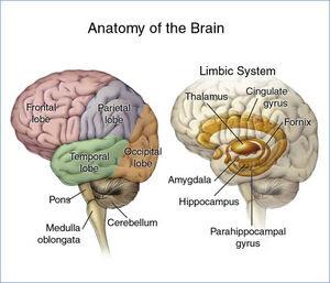Ανατομία του Εγκεφάλου