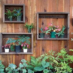 Pressure-treated wood left over from a building project turned into shadow boxes to hang on a fence. They're strong enough to support a gallon-size plant in a ceramic pot.