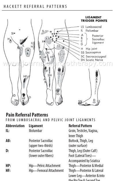 34 Pelvic Floor Trigger Points Diagram