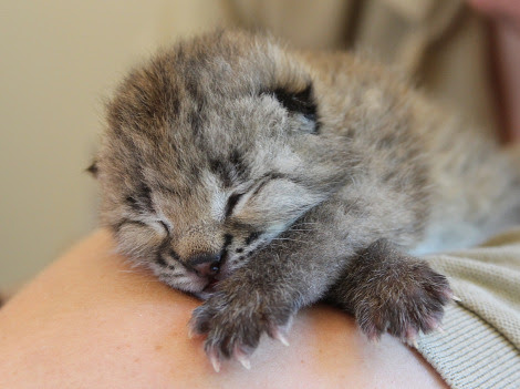 image from www.zooborns.com