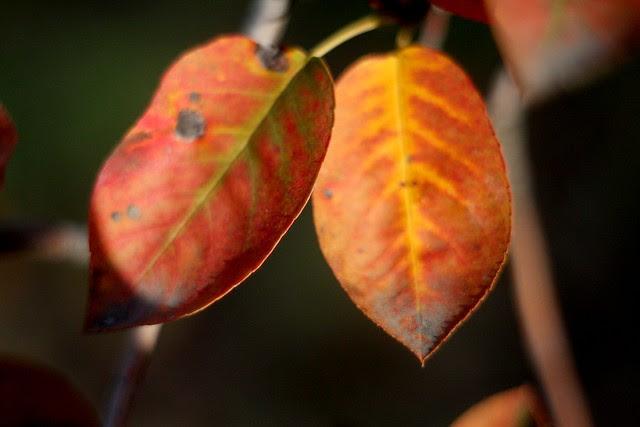 some november leaves