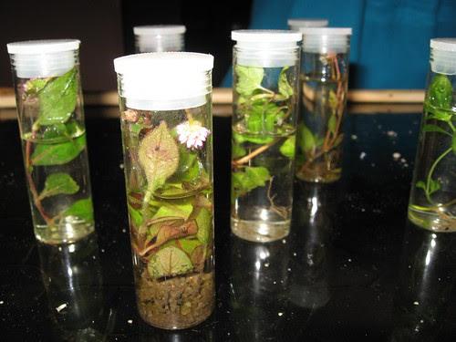 Biology experimental samples