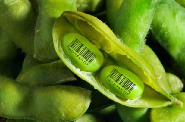 Monsanto-semillas