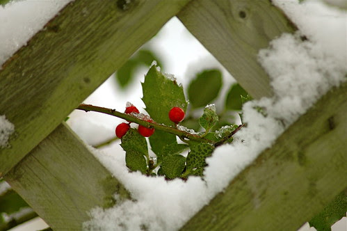 Winter framed~