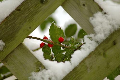 Winter framed~