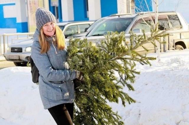 Югорчан призывают правильно утилизировать новогодние ели