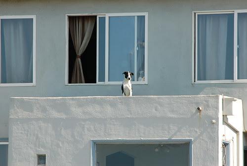 watchdog2.jpg