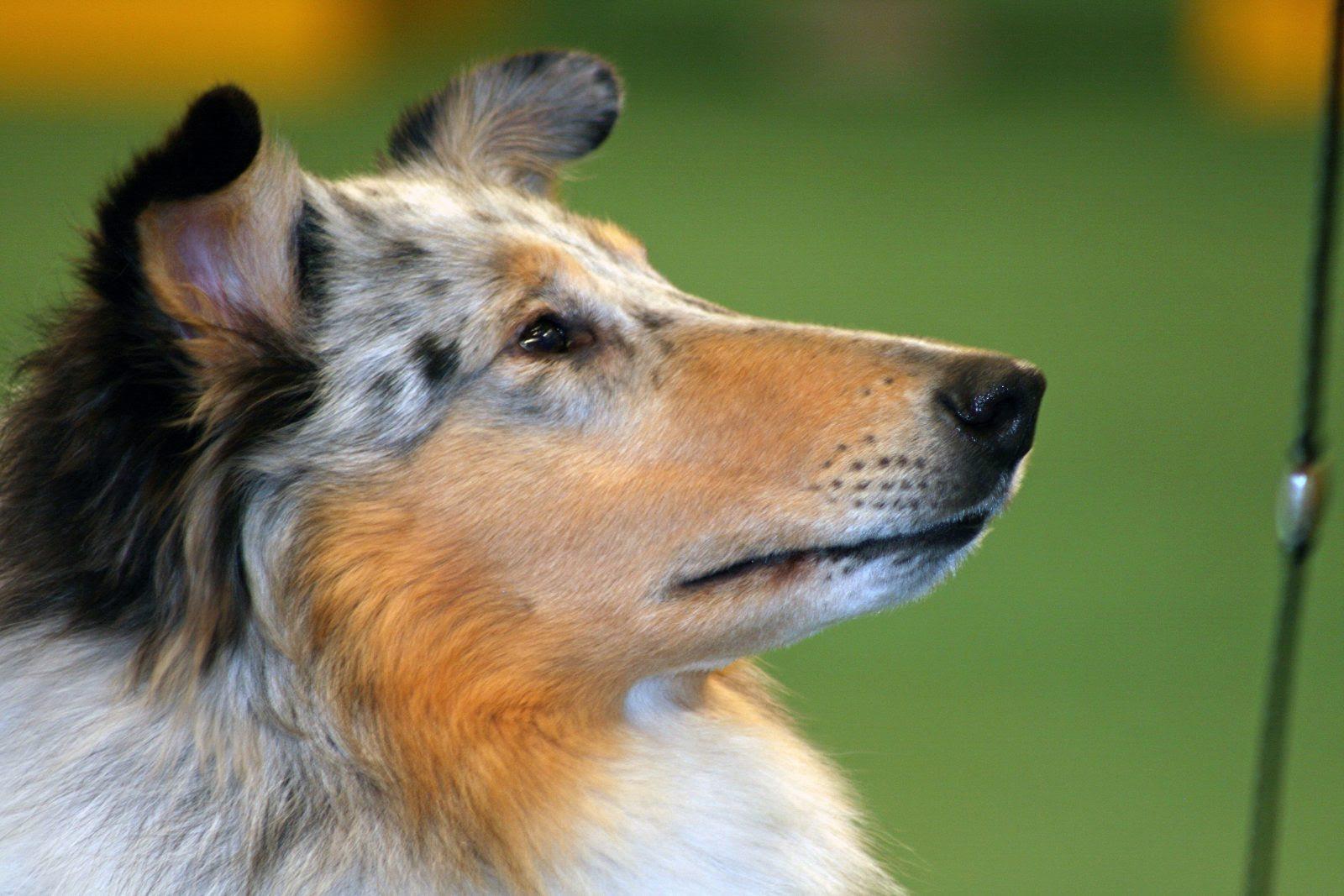 Los 12 Perros Más Bonitos Del Mundo
