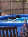 Tras entrar a la piscina sin el permiso de su dueño, disimila su travesura con elegancia