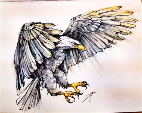 eagle  behance drawings illustrations pinterest