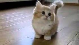 Vidio Kucing Lucu