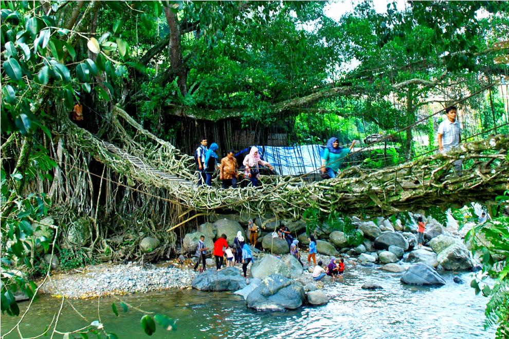 Obyek wisata Jembatan Akar di Kenagarian Puluik-Puluik, Kecamatan Bayang, Kabupaten Pesisir Selatan, Sumatera Barat. Foto : Erik Coubout