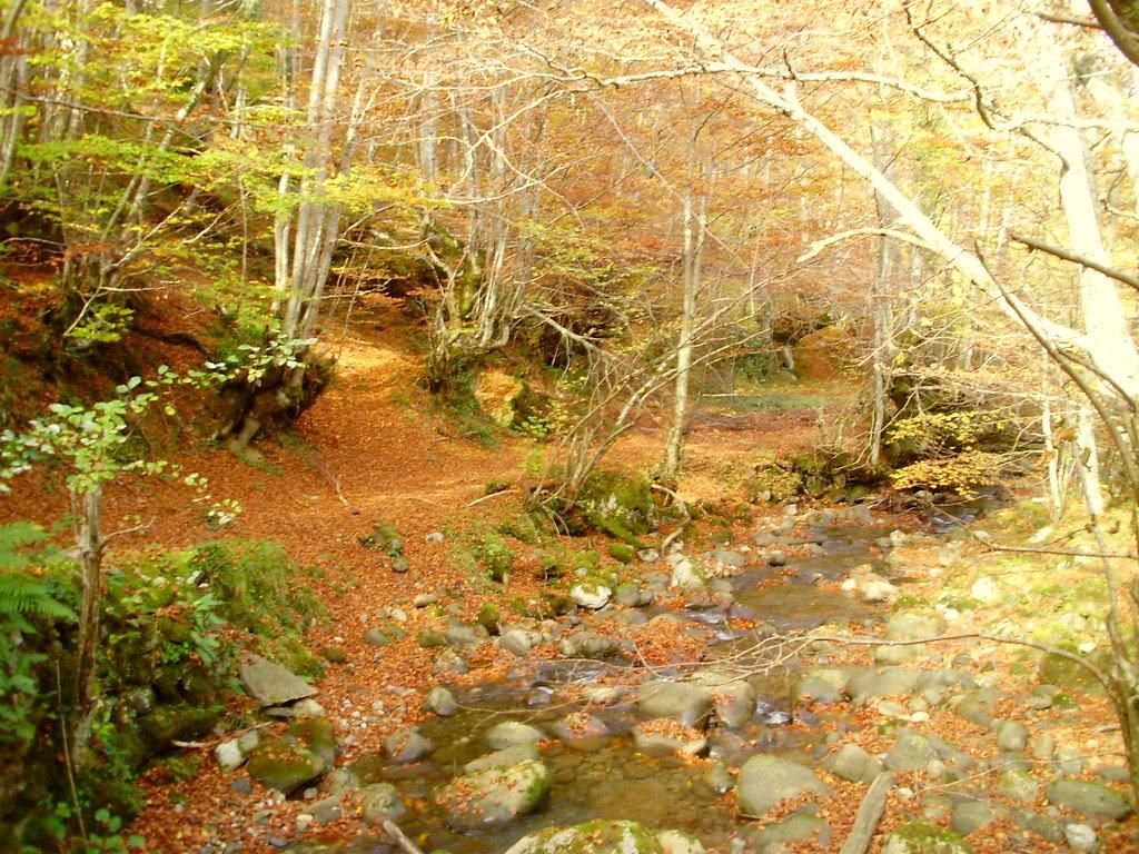 Bosque de Lindes 019