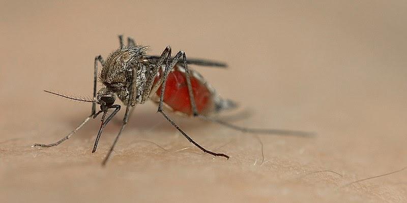 Mücken Jagen