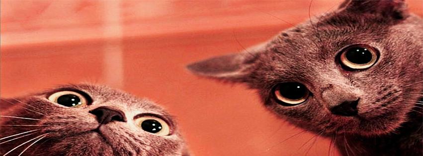 Capa para facebook gatos