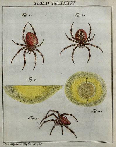Spiders V.4