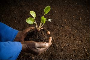 Sustainable sourcing will become a greater concern for businesses