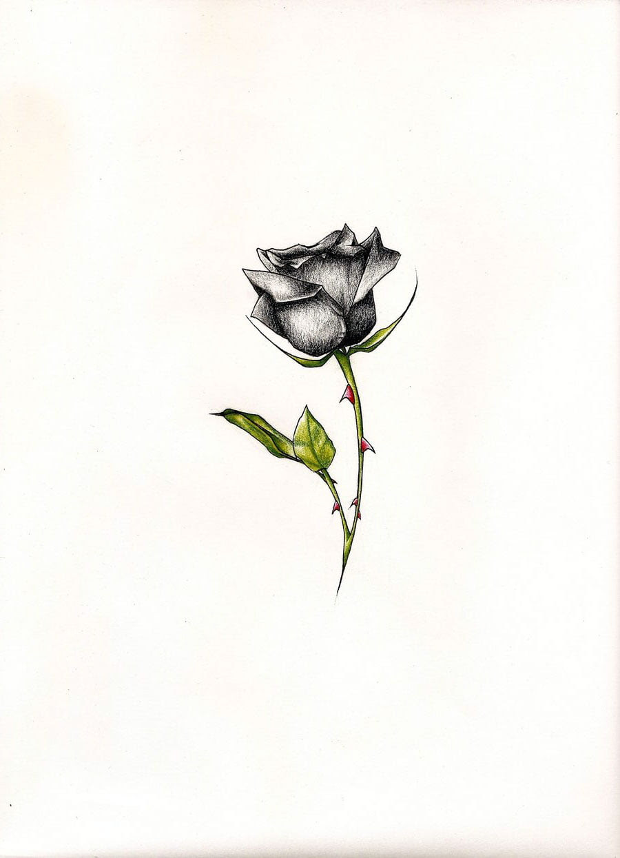 Black Rose Tattoo Pictures Cool Tattoos Bonbaden
