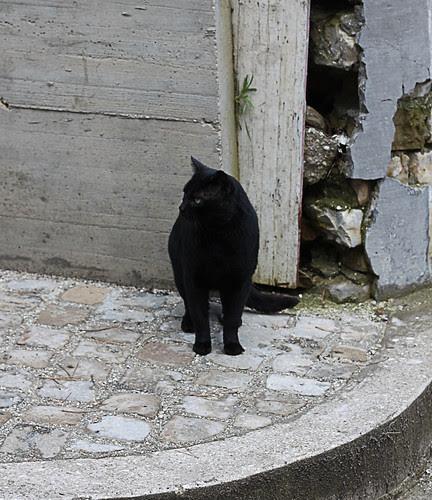 gatto nario