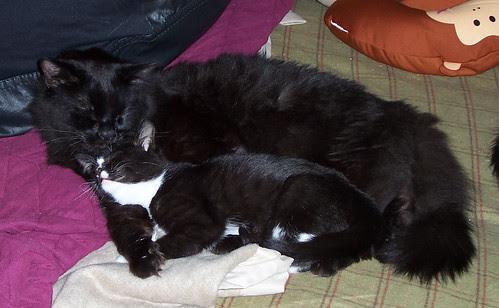 Eeyore cuddling Friday